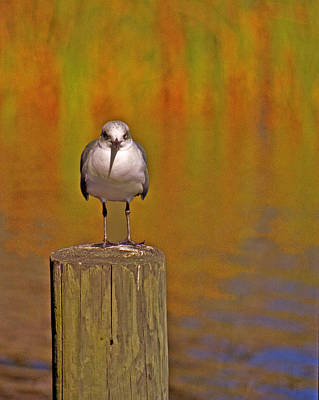 Bier Photograph - Gull On Post by Michael Peychich