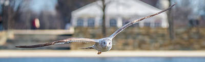 Photograph - Gull Over Mall Panoramic by Jeff at JSJ Photography