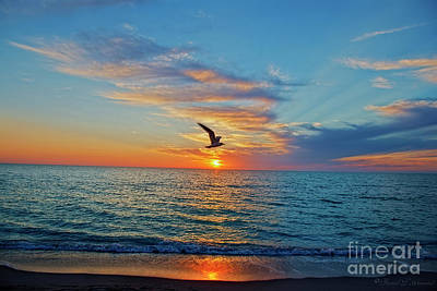 Photograph - Gull Over Sun by David Arment