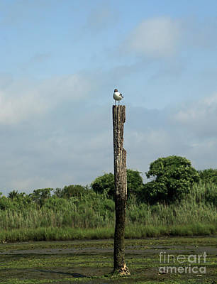 Photograph - Gull Perch by Mary Haber