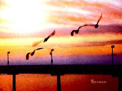 Photograph - Gull Play by Sadie Reneau