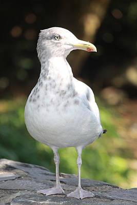 Abstract Male Faces - Gull Portrait by Paul Slebodnick