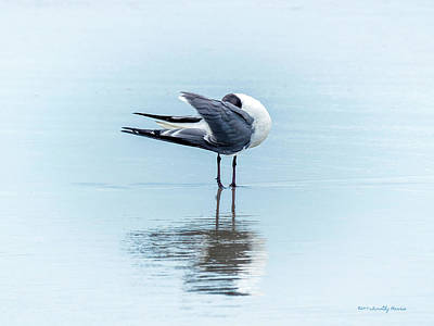 Photograph - Gull Reflection by Timothy Harris