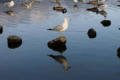 Photograph - Gull Reflections  by Christy Pooschke