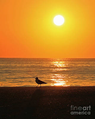 Photograph - Gull Rise V by Mary Haber