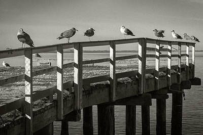 Photograph - Gull Row by Bud Simpson