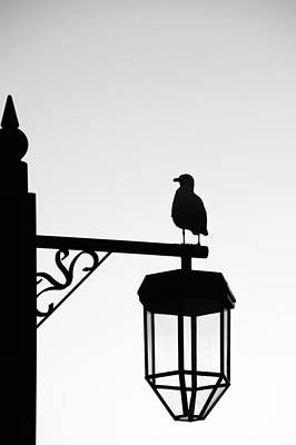Photograph - Gull Silhouette by Chris Day