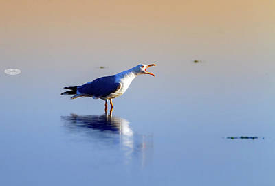Photograph - Gull Singing On The Water, Camargue, France by Elenarts - Elena Duvernay photo