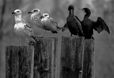 Photograph - Gulls And Cormorants by Steven Richman