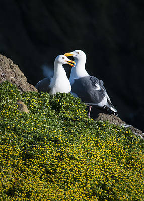 Photograph - Gulls And Flowers by Robert Potts