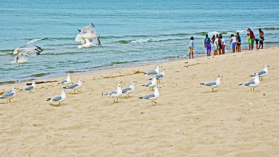 Photograph - Gulls And School Kids At  North Beach Park In Ottawa County, Michigan by Ruth Hager
