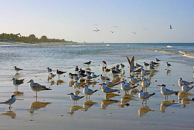 Gulls And Terns On The Sanbar At Lowdermilk Park Beach Art Print