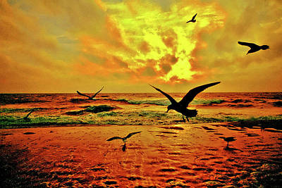 Photograph - Gulls At Dawn by Bill Jonscher