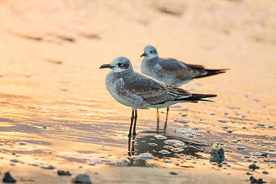 Photograph - Gulls At Dawn by Fran Gallogly