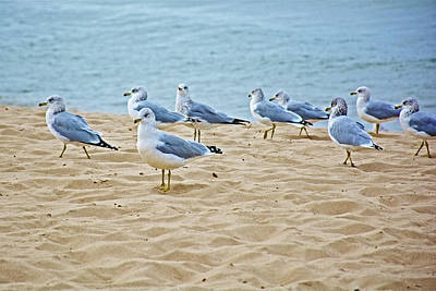 Photograph - Gulls By Lake Michigan At North Beach Park In Ottawa County, Michigan  by Ruth Hager