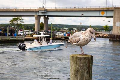 Ring-billed Gull Photograph - Gulls Cove by Karol Livote