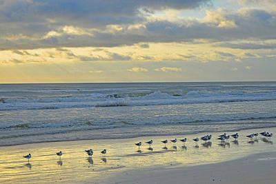 Photograph - Gulls Enjoying Sunset by Alan Lenk