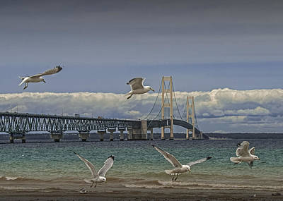 Randall Nyhof Royalty Free Images - Gulls Flying by the Bridge at the Straits of Mackinac Royalty-Free Image by Randall Nyhof