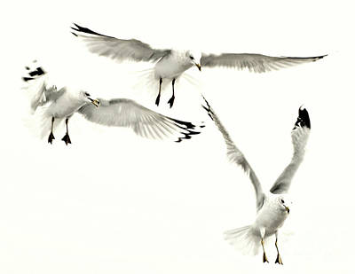 Photograph - Gulls Flying Hdr by Raymond Earley