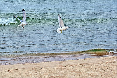 Photograph - Gulls Flying Over North Beach Park In Ottawa County, Michigan by Ruth Hager