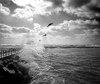 Photograph - Gulls In A Gale by James Rasmusson