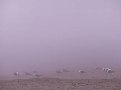 Photograph - Gulls In The Fog by Nancy Griswold