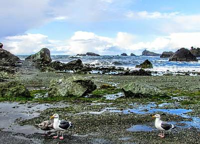 Photograph - Gulls by Marilyn Diaz