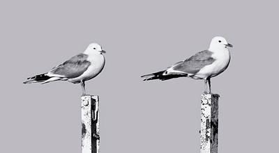 Photograph - Gulls by Matti Ollikainen