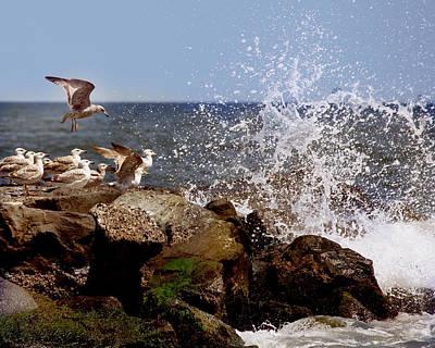 Gulls Of The Jersey Shore Original by Joseph G Holland