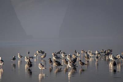 Photograph - Gulls On A Foggy Beach by Robert Potts
