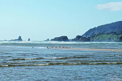 Photograph - Gulls On A Sandbar On Cannon Beach, Oregon by Ruth Hager