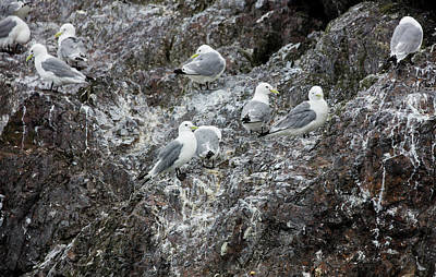 Photograph - Gulls On An Island by Gloria Anderson
