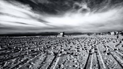 Photograph - Gulls On Beach by Michael Hope