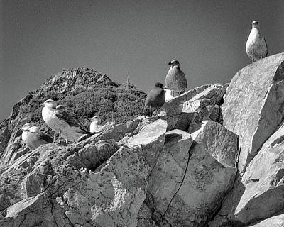 Photograph - Gulls On Guard - Pt Mugu, California by Samuel M Purvis III