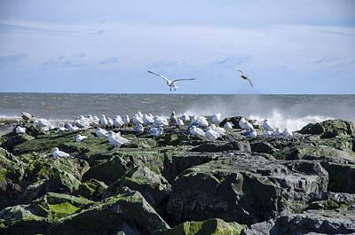Gulls On Rock Jetty Art Print by Maureen E Ritter