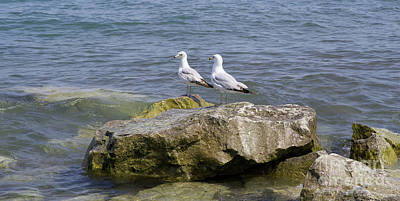 Photograph - Gulls On Rocks by Ann Horn