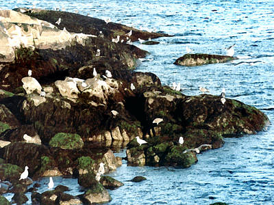 Painting - Gulls On Rocks by Paul Sachtleben