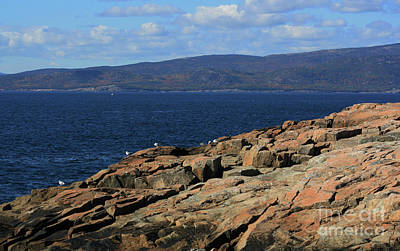 Photograph - Gulls On Schoodic Point by Patti Whitten