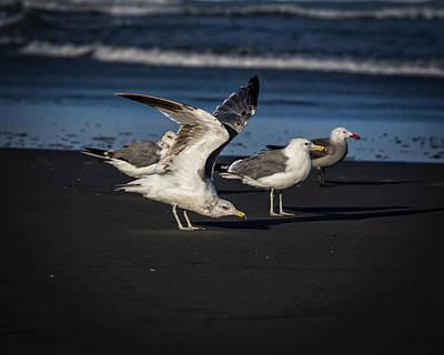 Photograph - Gulls On The Beach by Robert Potts