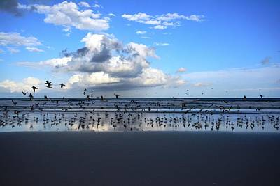 Photograph - Gulls On The Coast by Patricia Twardzik