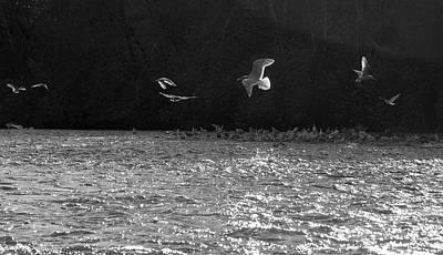 Gulls On The River Art Print