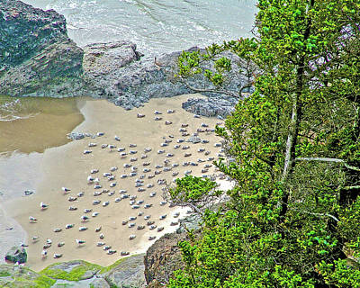 Photograph - Gulls On The Sand Below In Ecola State Park, Oregon by Ruth Hager