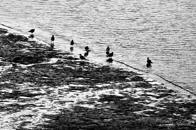 Photograph - Gulls On The Shore by Joe Bonita