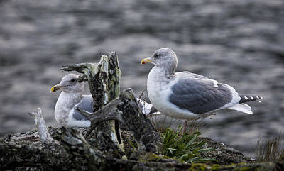 Photograph - Gulls by Randy Hall