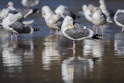 Photograph - Gulls Reflect by Robert Potts
