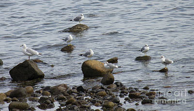 Photograph - Gulls Resting by Donna Munro