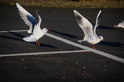 Photograph - Gulls Taking Off by Alex Leonard