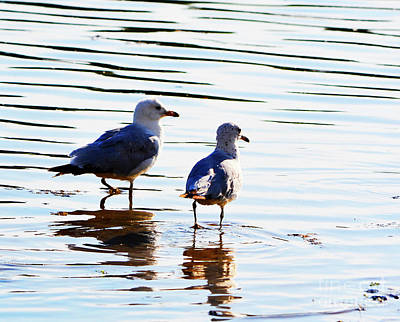 Photograph - Gulls by Traci Cottingham