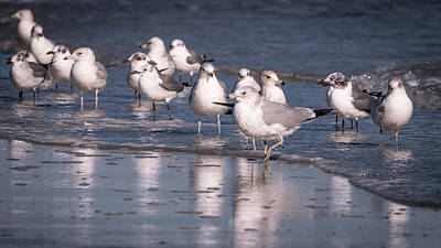 Photograph - Gulls by Van Sutherland