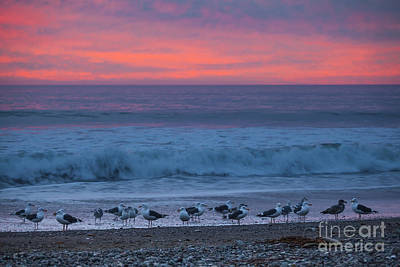 Photograph - Gulls With Pink Sky by Sharon Foelz